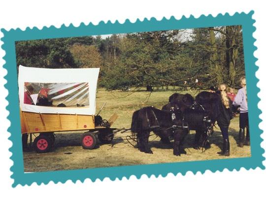 Shetlanderij de Sijphoeve in Loosdrecht kan uw kind, kleinkind, nichtje/neefje familie of vrienden een onvergetelijke paardendag bezorgen.