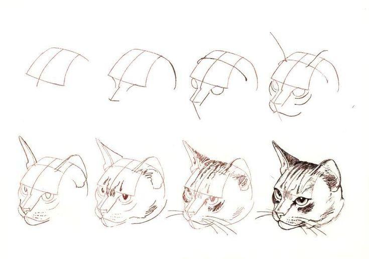 Como dibujar la cara de un gato paso a paso