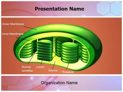 200 best pathology ppt and pathology powerpoint templates images photosynthesis chloroplast powerpoint presentation template is one of the best medical powerpoint templates by editabletemplates toneelgroepblik Gallery