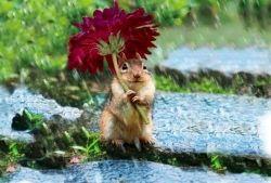 Veselé obrázky zvířátek - 13. díl - Vtipy, vtipné obrázky - NEZAŘADITELNÉ TÉMATA, DOTAZ