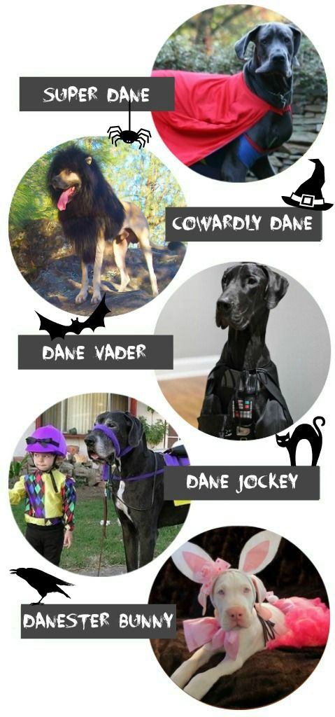 Today on The Dane Dame blog, Halloween costume inspiration for your Great Dane!
