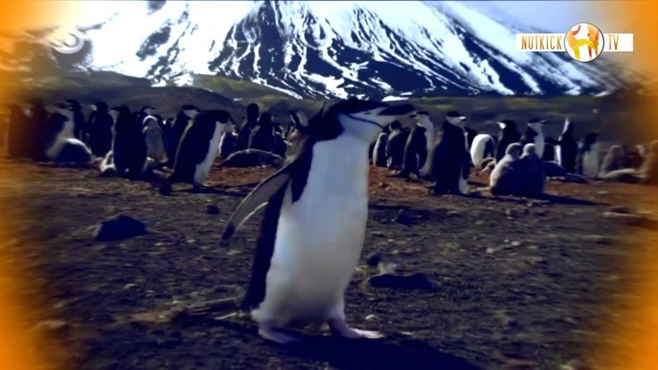 Animals are awesome that's a fact. Here some shorts of the most funniest animals alive on this beautifull planet. That mother earth created. If you like this video give it a thumb up. Subscribe if you want to keep up to date. Or visit our channel for more awesome video's. Leave a comment!