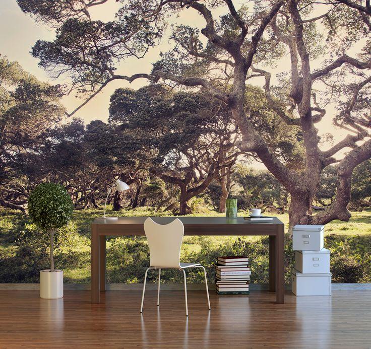 Forest of Dreams Wallpaper © Natascha van Niekerk Fine Art Photography as home decor. Custom photographic wallpaper.