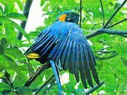 """New artwork for sale! - """" Blue And Yellow Macaw Parrot  by PixBreak Art """" - http://ift.tt/2mHemFd"""