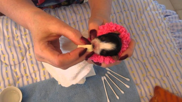 Using a cosmetic sponge to feed a puppy Dog Repro. and
