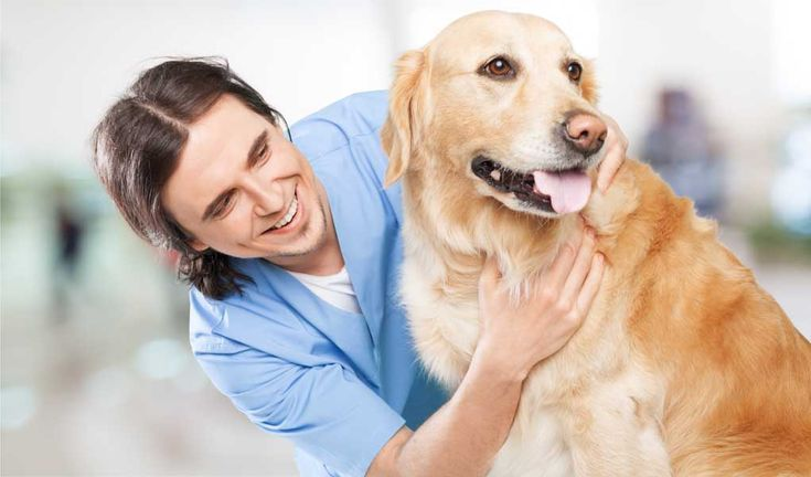 Food And Nutrition Is A Confusing Subject It S Hard To Know What Kind Of Food Vet Tips For Dog Parents Confusi Dog Parents Dogs Dog Boarding Near Me