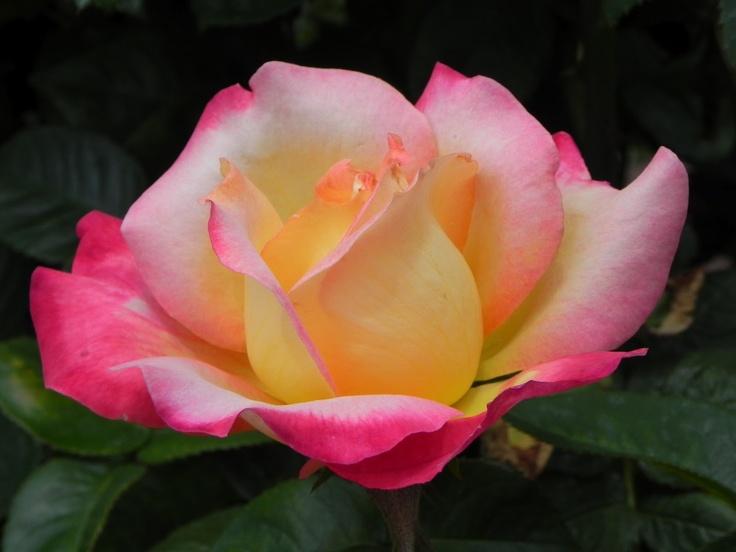 Flower Garden Ideas In Michigan 44 best flowers in michigan images on pinterest | michigan, flower
