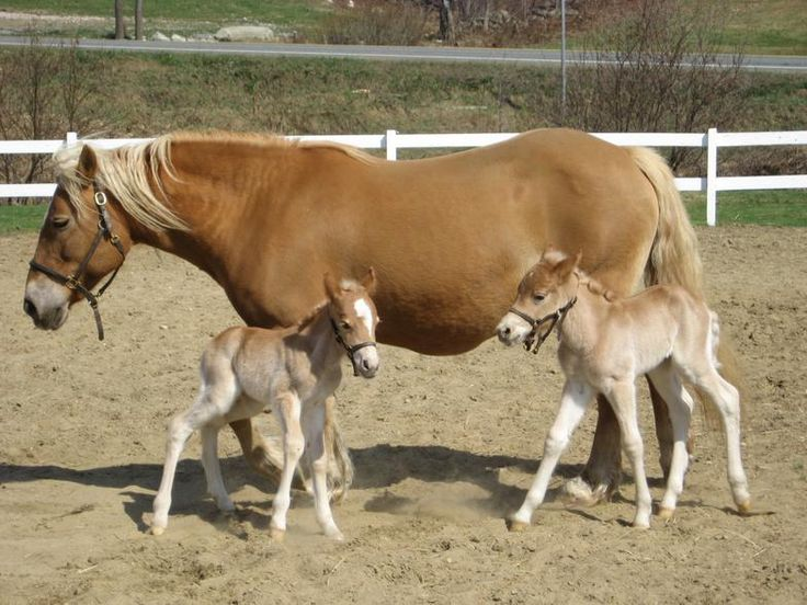 Pregnant Horse Giving Birth | www.pixshark.com - Images ...