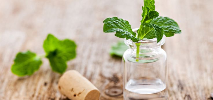 5 Detoxifying Essential Oils To Boost Immunity