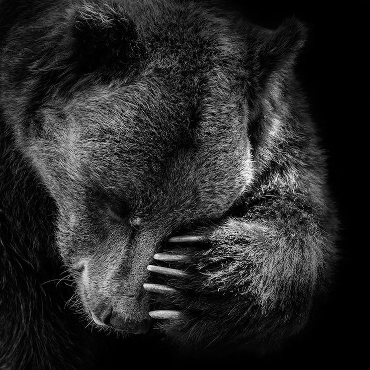 Bear in black white i by lukas holas is printed with premium inks for brilliant