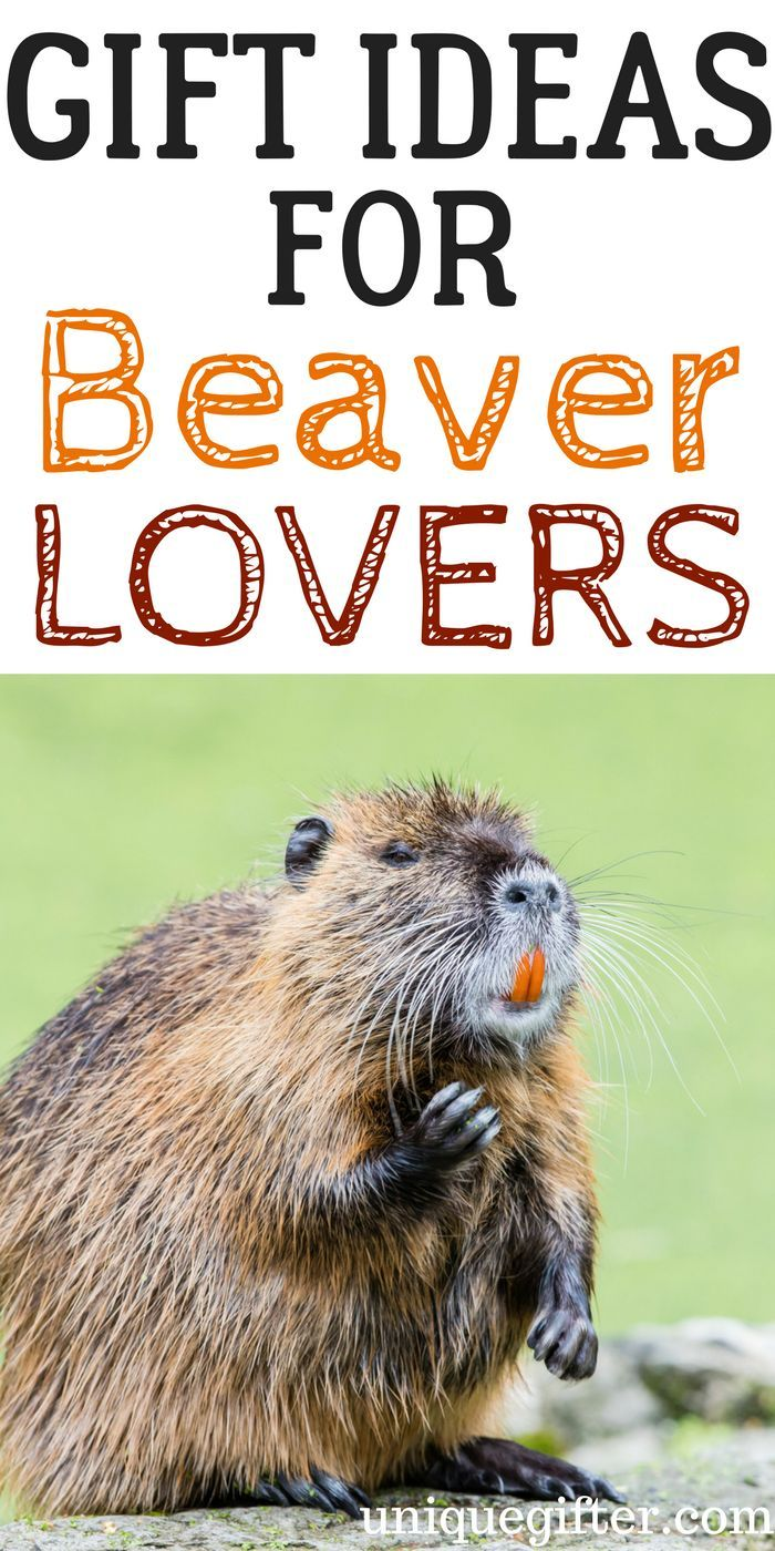Gift Ideas for Beaver Lovers   Gift Ideas for Beaver Collectors   Beaver Lovers Gifts   Presents for Beaver Collectors   The Best Beaver Lovers Gifts   Cool Beaver Gifts   Beaver Gifts for Birthday   Beaver Gifts for Christmas   Beaver Jewelry   Beaver Artwork   Beaver Clothing   Things to Buy a Beaver Lover   Gift Ideas   Gifts   Presents   Birthday   Christmas   Beaver Gift Ideas