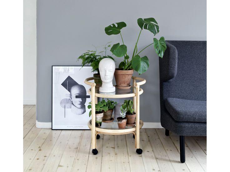 Oltre 1000 idee su piante da appartamento su pinterest for Piante da frutto a 1000 metri