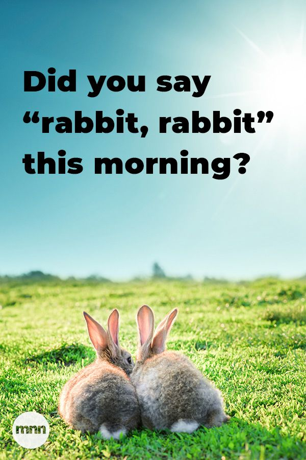 Did You Say Rabbit Rabbit This Morning Rabbit Rabbit Illustration Bunny Pictures