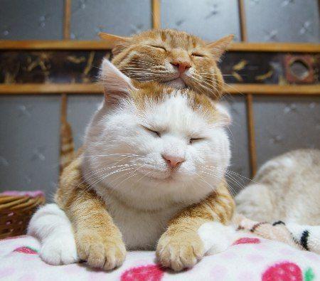 Kitty Stack おんぶ