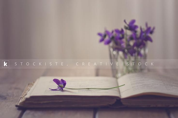 Romance in a book. The violet by Alicia Llop   Stockiste.com  Creative stock + Exclusivity on the GO!   Download Link: https://www.stockiste.com/display/the-violet/8934  #Stockiste, #StockisteCreativeStock, #Stockphoto, #Stockimage, #Photography, #Photographer, #AliciaLlop, #ContentMarketing, #Marketing, #Storytelling, #Creative, #Communication, #Romance, #Book, #Violet, #Flower,  The violet © Alicia Llop