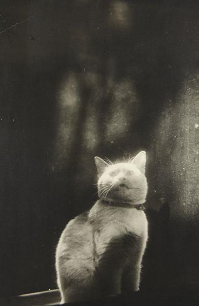 Shikanosuke Yagaki: The Doors, Cat Ghosts, Magic Cat, Ghosts Cat, Doors Cat, Window Cat, Cat Cat, 1930S Kyoto, Shikanosuk Yagaki Kits