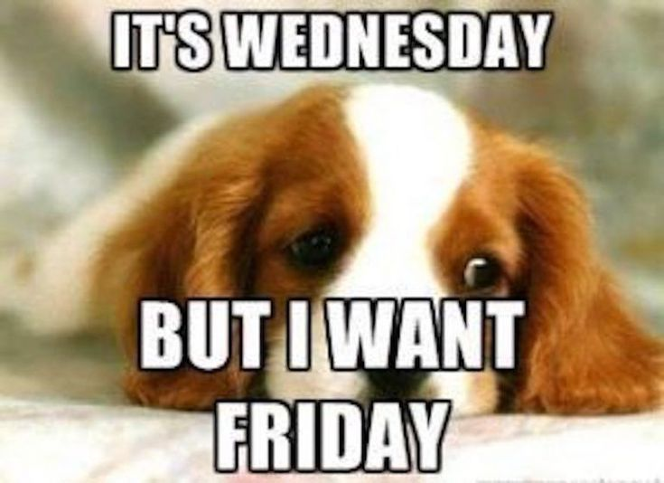 It S Wednesday These Memes Will Help Get You To Friday Funny Wednesday Memes Morning Quotes Funny Wednesday Humor