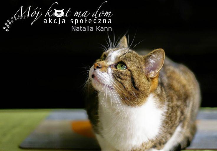 Mój kot ma dom - Akcja społeczna: IV.055