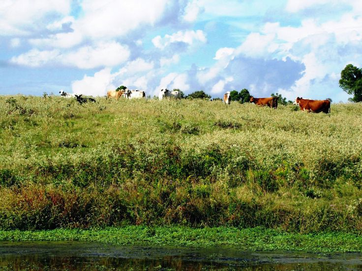 AGRICULTURAL / RECREATIONAL / INVESTMENT LAND WITH HOME