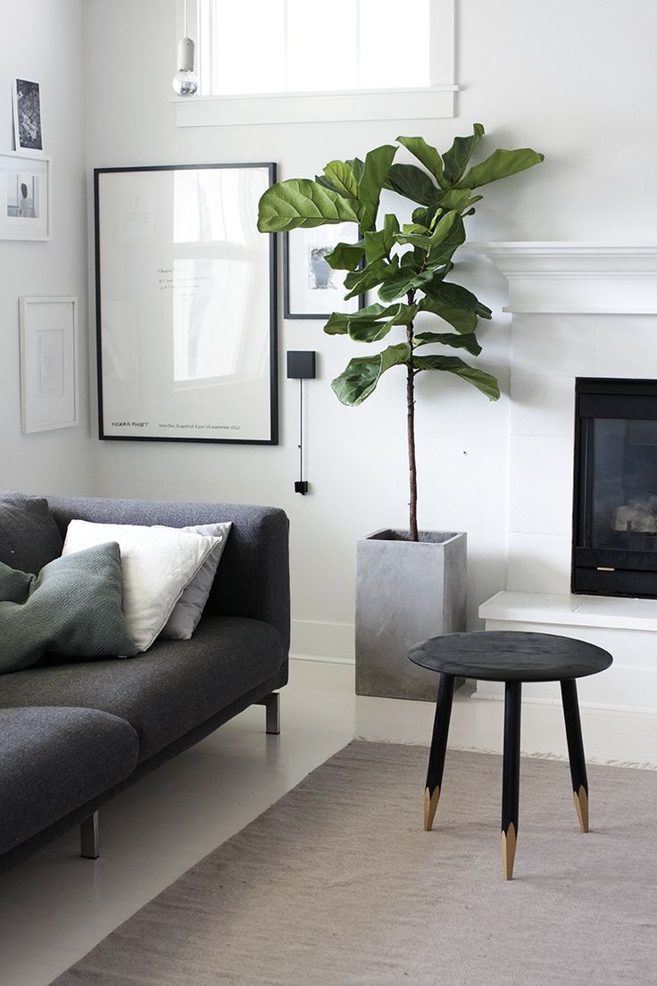 Modern Living Room Plants
