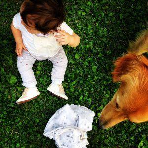 Pies i niemowle w domu. Jak przygotować psa na przyjście dziecka do domu