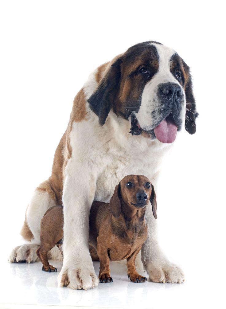 ... dog breeds ugly dog breeds most intelligent dog breeds complete list