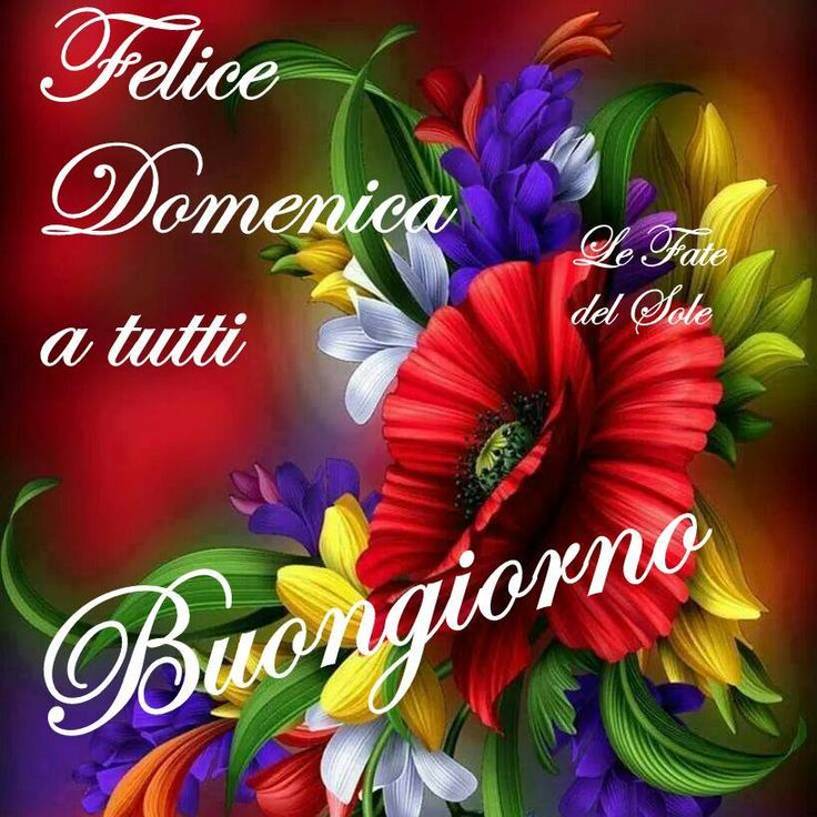 510 Best Buona Domenica Images On Pinterest