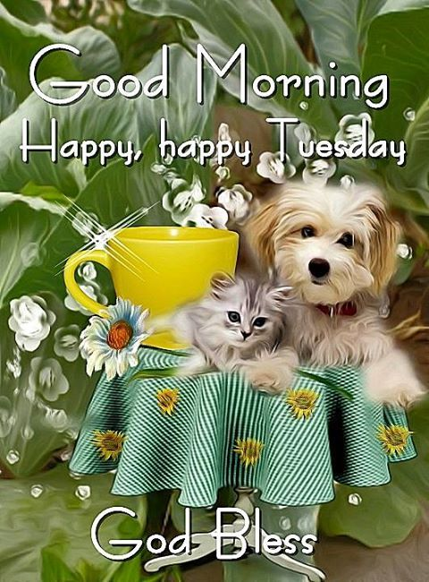 Good Morning, Happy Happy Tuesday. God Bless.