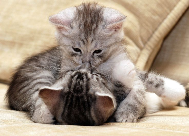 8 animal kisses that will melt your heart   PlayBuzz