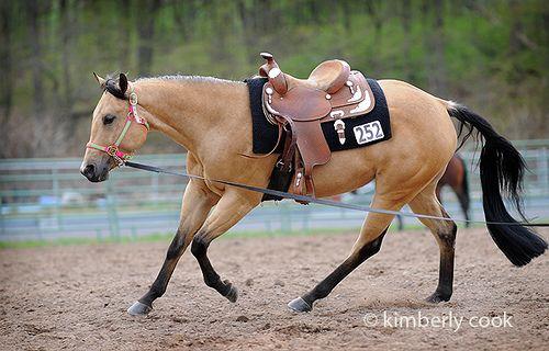 Buckskin quarter horse! So pretty!!