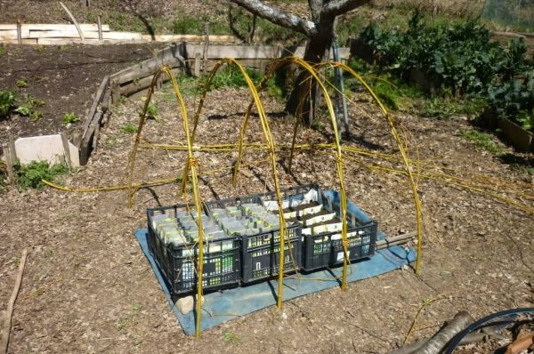 Creare una mini-serra coni rami di salice