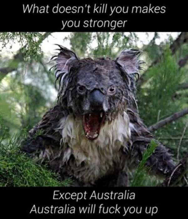 Australia, the land of kangaroos and everything that will kill you (35 Photos)