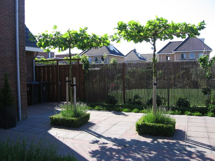 In de twee voorste vakken die we creëren tegen het terras aan, plaatsen we twee dakplatanen. Mooie bomen en leuk om lantaarns in te hangen op een mooie zomeravond of tijdens een feestje.