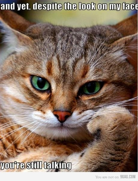 too funny: Stop Talk, Funny Kitty, The Thinker, Funny Pictures, Funny Cat, Funny Animal, Cat Faces, Take A Hints, Green Eye