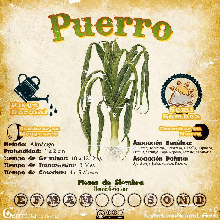 Puerro2.jpg (700×700)