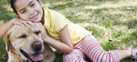"""Como Entrenar A Un Perro Adulto. Un buen adiestramiento genera grandes resultados   """"Dedicación y amor""""   Cuando estas pensando en adoptar un perro, debes analizar diferentes aspectos el tipo de raza, la edad si tiene las vacunas al día irán ligados que también deberás pensar en que si ya tienes listo la caseta donde estará el perro, su cama, la comida, los juguetes, los recipientes, etc, en sí debe saber que tener un perro en....  Como Entrenar A Un Perro Adulto. Para ver el artículo…"""