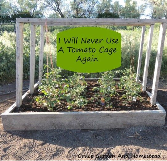 DIY TOMATO PLANTER & many other tomato support ideas : sturdy, can throw pest / hail / frost protection over it, portable for rotating crops / chickens.  (something's wrong with planter's source)