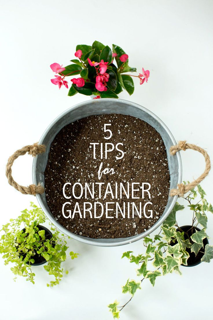 74 best Container Gardening images on Pinterest | Backyard patio ...