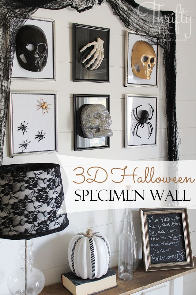 3D Halloween specimen gallery wall using dollar store frames and finds. Great last minute Halloween decorating idea!