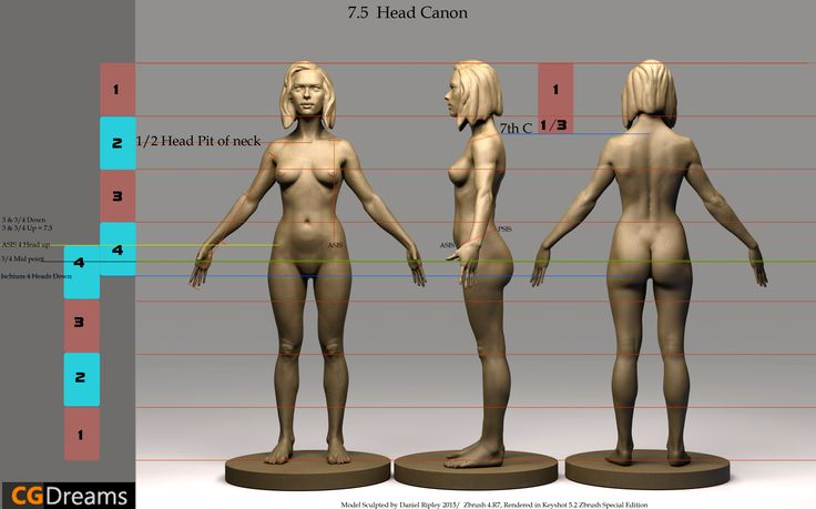 Human Anatomy Proportions Basic Guide.