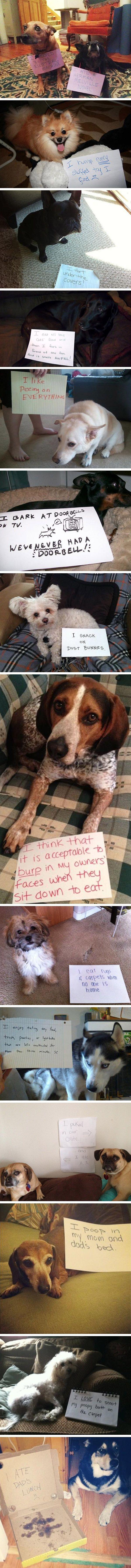 Shaming dogs.