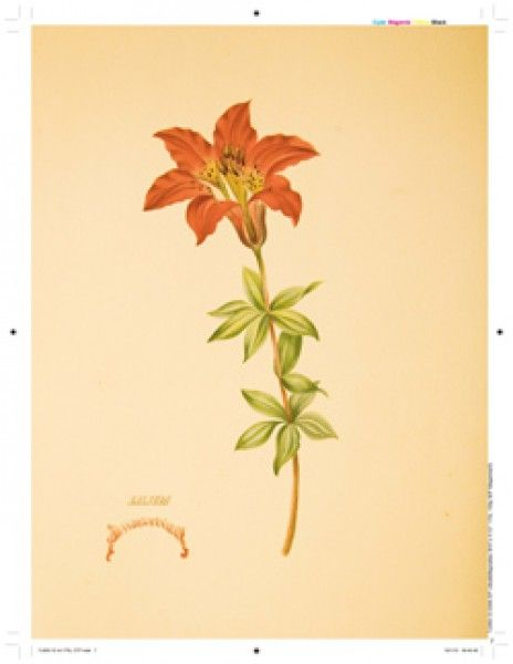 LILIES & MAGNOLIAS -Botanical Watercolors  This lavish, hand-painted artist volume comes to light for the first time since it was created by Deborah Passmore Gillingham (b. ? - 1877) in the mid 1870s. A celebration of the lilies and magnolias of the American south, it will be a treasure for all who love antique botanical art.