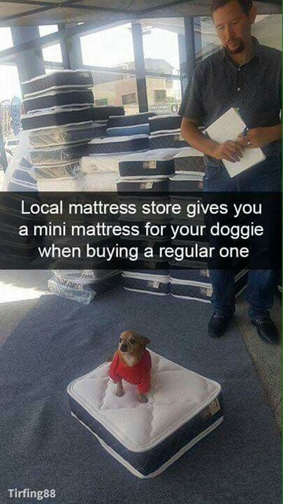 Cute...But my dog would eat that mattress. He's 5 times bigger then that dog, At least.