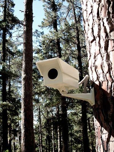 Birdhouse security camera