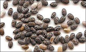 Bien que vous ayez récemment entendu parler d'elles, elles existent depuis des milliers d'années. En raison de leur valeur, les graines ont également été utilisées comme monnaie. Les graines de chia (Latin: Salvia hispanica) contiennent des acides gras oméga, des protéines, des antioxydants et des fibres. Elles ont un arôme doux de noix et parce qu'elles absorbent …