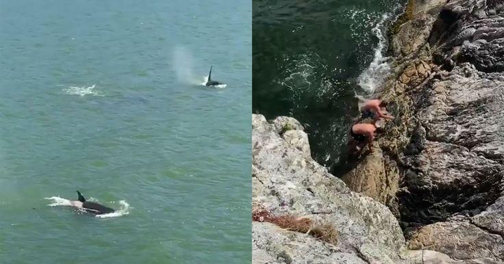 Φάλαινες δολοφόνοι εντοπίζουν δύο κολυμβητές και ακολουθεί μια πραγματικά τρομακτική στιγμή