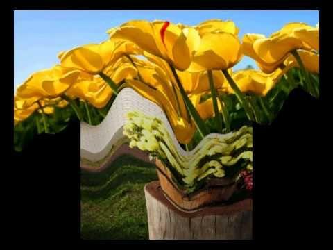 Elon kukkia esit, Aila