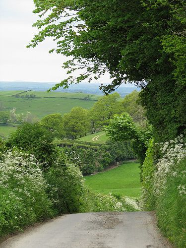 Country lane in summer in England. But could be Scotland also, as this is how Perthshire looks right now