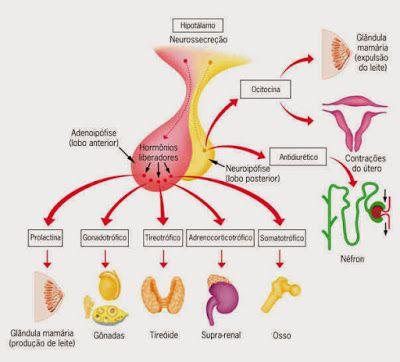 A deficiência pode aparecer a qualquer momento durante a infância ou adolescência.Quando os médicos descartam a possibilidade de outras causas de falha de crescimento,podem recomendar exames especiais para DGH.Crianças com deficiência de GH são tratadas com injeções diárias de HGH DNA-recombinante, geralmente por um período de anos.Com o diagnóstico precoce e o tratamento,essas crianças geralmente aumentam a sua taxa de crescimento,e podem chegar até perto da média para os adultos