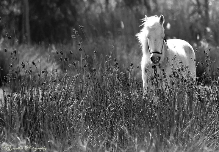 Tracy Gymellas Photography.Sleepy horse.